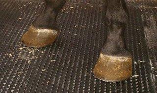 Gumena podloga za krave